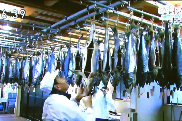 塩引鮭作り実演