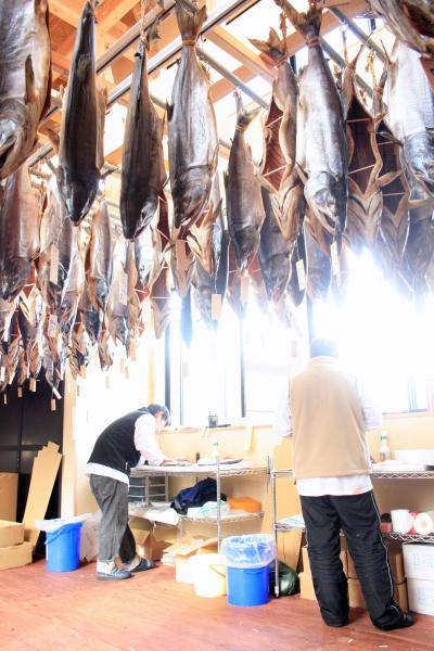 鮭こうばで塩引鮭作り