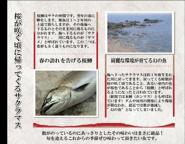 幻の高級魚サクラマス(本鱒)