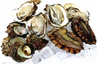 日本海天然貝セットのイメージ